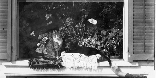 Cats in glass plate photo